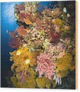 Coral Reef Seascape, Australia Wood Print