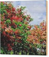 Coral Shower Trees Wood Print