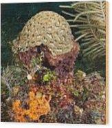 Coral Top Knot Wood Print
