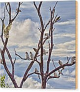 Corella Tree Wood Print