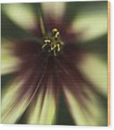 Coreopsis Route 66 Wood Print