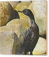 Cormorant 1 Wood Print