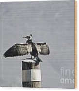 Cormorant Bird Wood Print