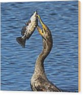 Cormorant Catches Catfish Wood Print