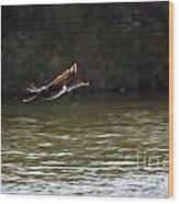 Cormorant Flight Series - 1 Wood Print