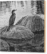 Cormorant On Rocks Wood Print
