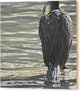 Cormorant Portrait In Shallow Water Wood Print