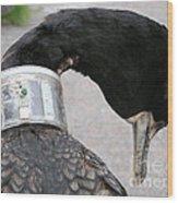 Cormorant With Radio Collar Wood Print