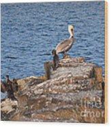 Cormorants And Pelican Wood Print