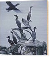 Cormorants Fly Above Driftwood, Grey Wood Print by Leanna Rathkelly