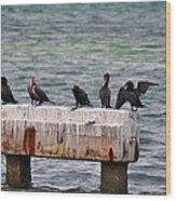 Cormorants Key West Wood Print