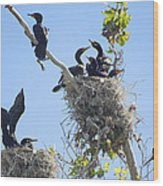 Cormorants Nesting Wood Print