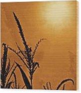 Corn Field Haze  Wood Print