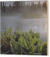 Corn Lilies Near Crescent Creek, Oregon Wood Print