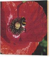 Corn Poppy Flower Wood Print