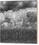Cornfield And Clouds Wood Print