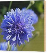 Cornflower Blue Wood Print by Sharon Lisa Clarke