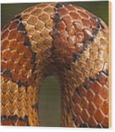Cornsnake Elaphe Guttata Scale Pattern Wood Print