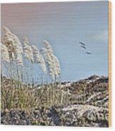 Coronado Island Pampas Grass Wood Print