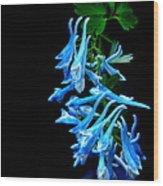 Corydalis  Wood Print