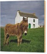 Cottage And Donkey, Tory Island Wood Print