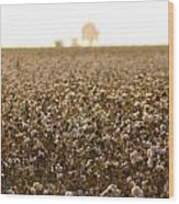 Cotton Field Donana Spain Wood Print