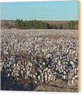 Cotton Landscape Protected 01 Wood Print