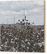 Cotton Ready For Harvest In Alabama Wood Print