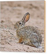 Cottontail Bunny Wood Print