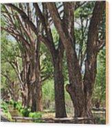 Cottonwood Desert Oasis - Utah Wood Print