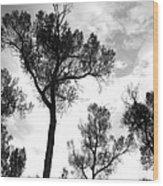Cottonwood Silhouette Ser1 Wood Print