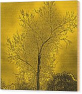 Cottonwood Tree April 2012 In Gold Wood Print