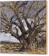 Cottonwood Tree At San Pedro House Wood Print