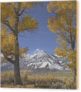 Cottonwood Trees Fall Foliage Carson Wood Print by Tim Fitzharris
