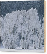 Cottonwood Trees With Frost Wood Print