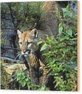 Cougar Coming Through Wood Print