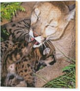 Cougar Mom Cleans Youngster Wood Print