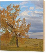 Country Autumn Landscape Wood Print by James BO  Insogna