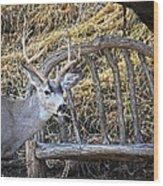 Country Buck Wood Print