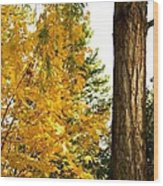 Country Color 19 Wood Print