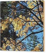 Country Color 25 Wood Print
