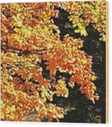 Country Color 26 Wood Print