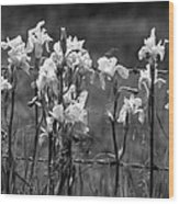 Country Flowers Wood Print