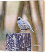 Country Quail Wood Print