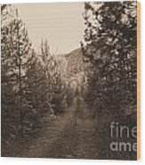 Country Road In Sepia  Wood Print