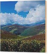 Country Road, Near Luggala Mountain, Co Wood Print