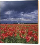 County Kildare, Ireland Poppy Field Wood Print