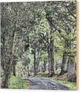 County Roads Wood Print