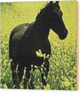 County Tipperary, Ireland Horse In A Wood Print
