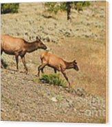 Cow And Calf Elk Wood Print